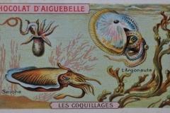 Argonaute-1
