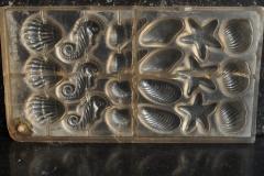 Plastic, Gastropode, Bivalve, Seahorse, Starfish-4
