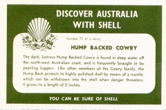 Hump Backed Cowry-2 75