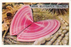 Pink Butterfly Tellens-1 70