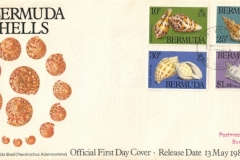 Bermuda 1982 Perotrochus Slit Shell