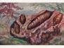 Karnemelkzeep