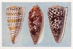 Kegelslakken-1