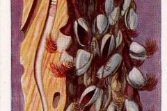Paalworm en Eendenmossels-1