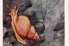 Wulk en zeedennetje-1