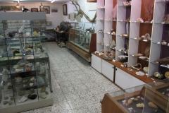 Schelpenmuseum Zaamslag-004