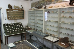 Schelpenmuseum Zaamslag-005