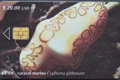 Cuba 2001 Cyphoma gibbosum
