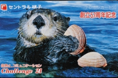 Japan Sea otter eats clam 37