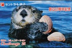 Japan Sea otter eats clam 37