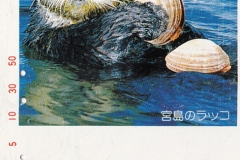 Japan Sea otter eats clam 79