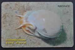 Thailand 2005 Cassidae 232