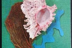 Muricidae Trochidae