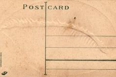 Cypraea 1741-2