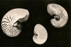 Natuurhistorisch Museum Enchede-003
