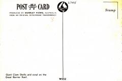 Tridacna gigas 1745-2