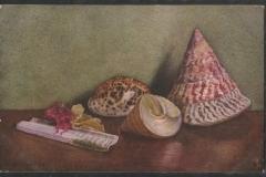 Tuck Postcard, Trochus niloticus Cypraea tigris etc.1616-1