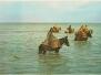Postcard, Shellfishermen