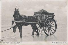 Schelpenvisser 1565-1
