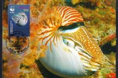 Palau 2006 Nautilus belauensis 1361