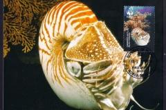 Palau 2006 Nautilus belauensis 1363