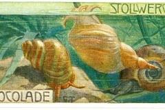Gasteropodes pulmobranches-1