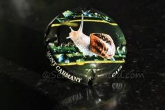 Cava Carmany Landsnail3