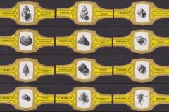Murillo Yellow 1-12_29 x 67 mm