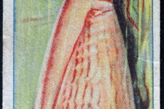 Conus princeps-1 149
