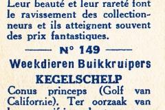 Conus princeps-2 149