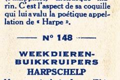 Harpa articularis-2 148