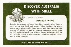 Angel Wing-2 74