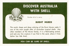 Burnt Murex-2 66