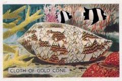 Cloth of Gold Cone-1 67