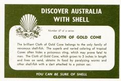 Cloth of Gold Cone-2 67