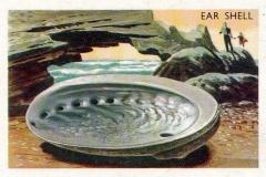 Ear Shell-1 64