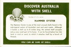 Hammer Oyster-2 61
