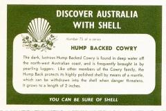 Hump Backed Cowry-2 75