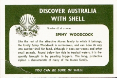 Spiny Woodcock-2 62