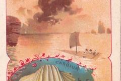 Cardium-1