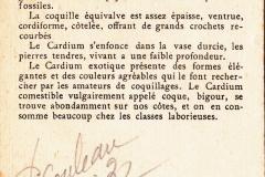 Cardium-2