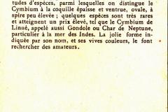 Cymbium-2