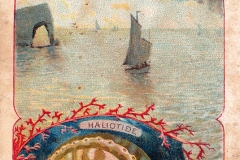 Haliotide-1