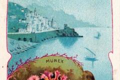 Murex-1
