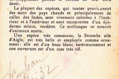 Strombe-2.