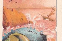 Turbinelle-1