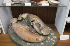 Schelpenmuseum Zaamslag-009