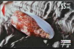 Fiji Islands 1998 Conus geographus