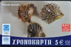 Greece 2004 Pinctada pinctada 308