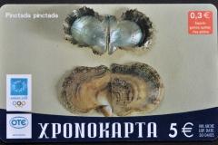 Greece 2004 Pinctada pinctada 309